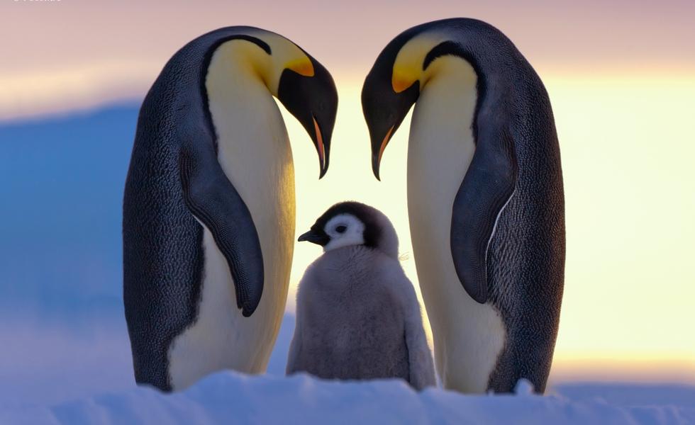 Parents' Love
