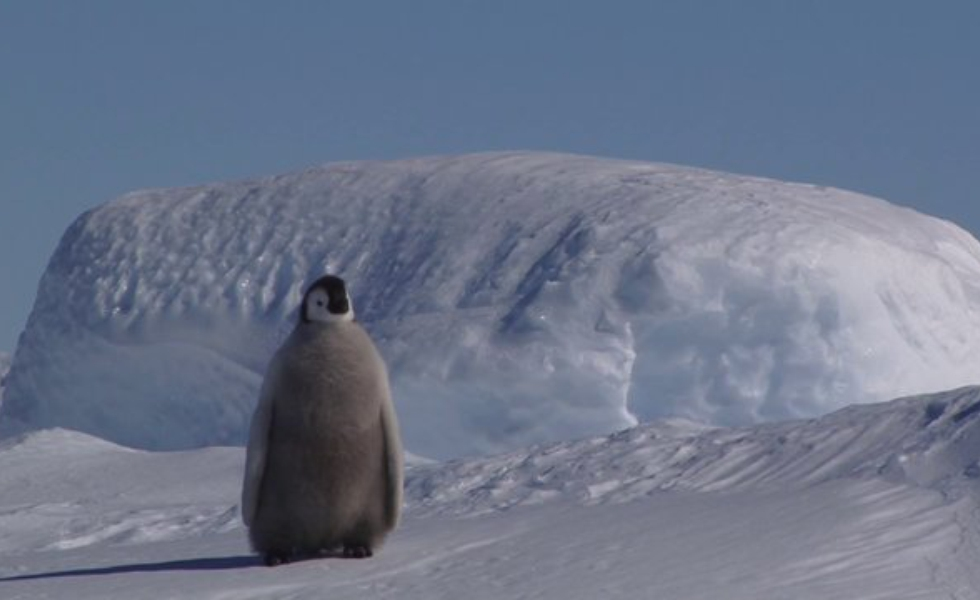 Antarctica. At the End of the World